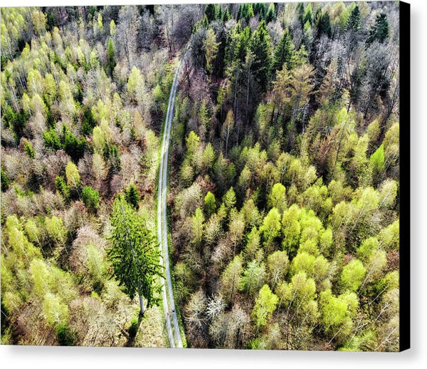 Early Spring Forest From Above - Canvas Print