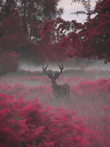 Strawberry Stag by Max Ellis
