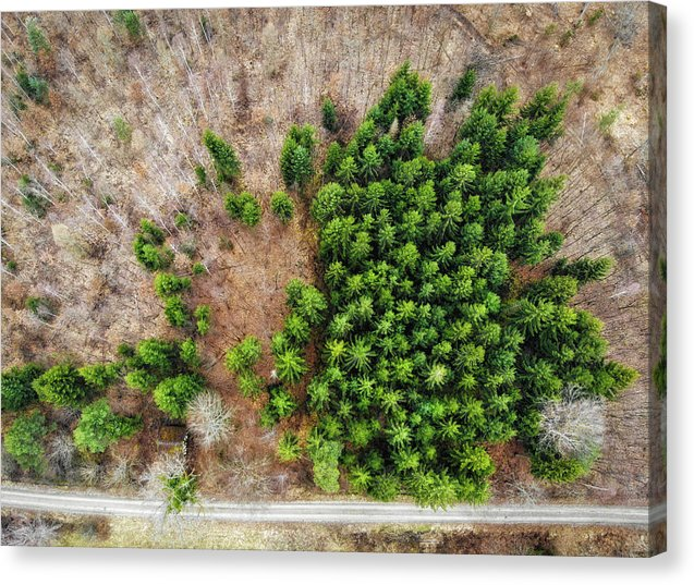 Forest With Green Trees From Above - Canvas Print