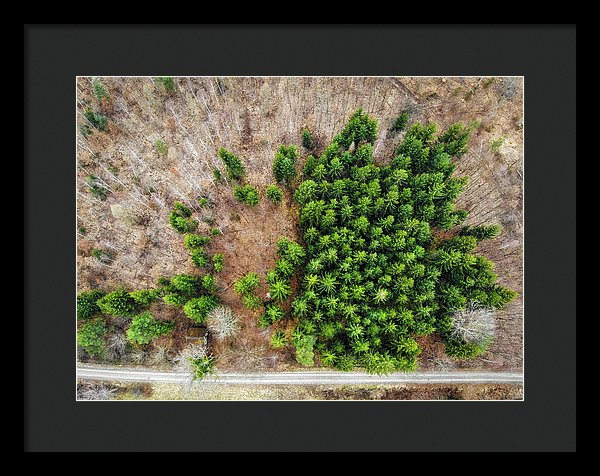 Forest With Green Trees From Above - Framed Print