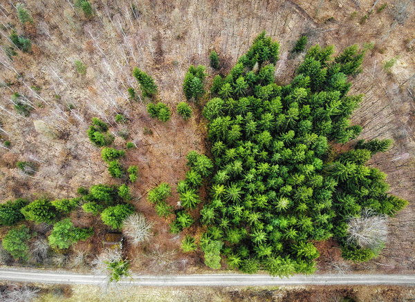 Forest With Green Trees From Above - Art Print