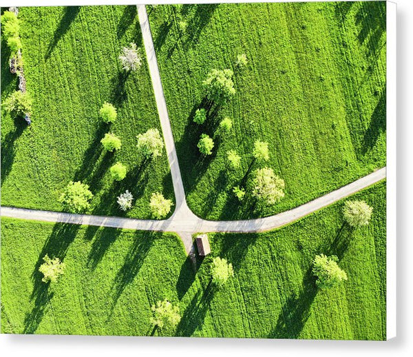 Fresh Green Meadow With Trees In Spring Aerial View - Canvas Print