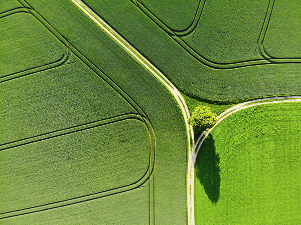 Geometric Landscape 05 Tree And Green Fields Aerial View - Art Print