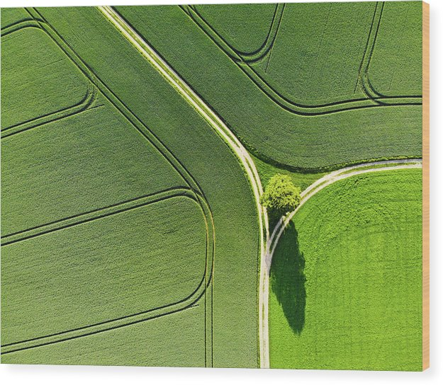 Geometric Landscape 05 Tree And Green Fields Aerial View - Wood Print