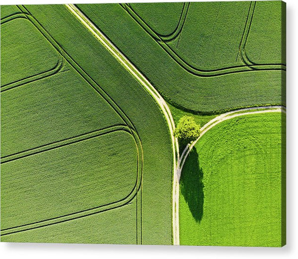 Geometric Landscape 05 Tree And Green Fields Aerial View - Acrylic Print
