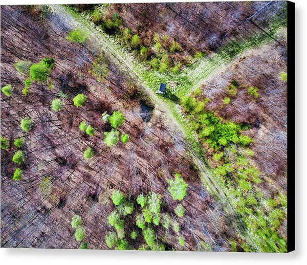 German Forest In April Aerial View - Canvas Print