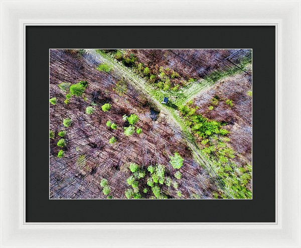 German Forest In April Aerial View - Framed Print