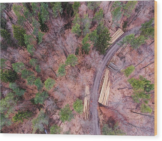 Green And Orange Forest Aerial Image - Wood Print