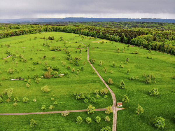Green Meadow With Trees In Germany Aerial - Art Print