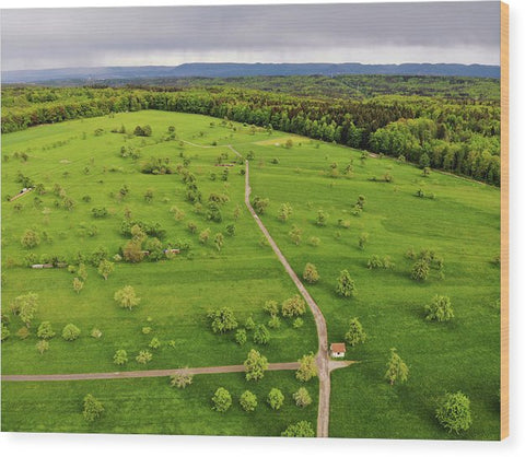 Green Meadow With Trees In Germany Aerial - Wood Print