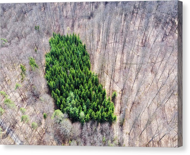 Green Tree Island In March Forest From Above - Canvas Print