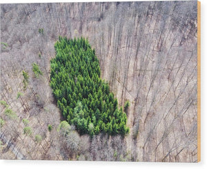 Green Tree Island In March Forest From Above - Wood Print