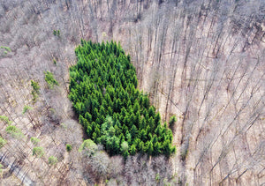 Green Tree Island In March Forest From Above - Art Print