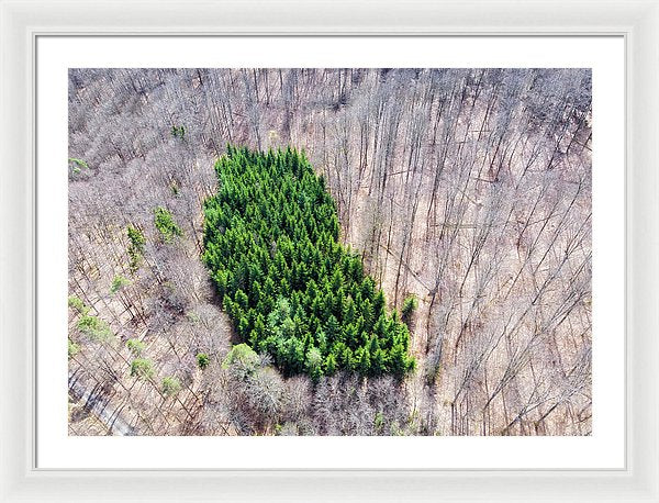 Green Tree Island In March Forest From Above - Framed Print
