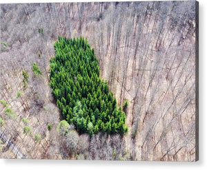 Green Tree Island In March Forest From Above - Acrylic Print