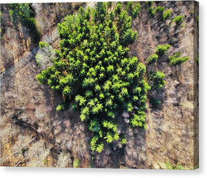 Green Trees In Brown Forest Aerial View - Canvas Print