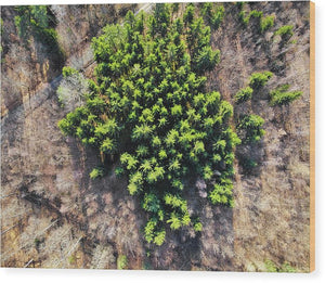 Green Trees In Brown Forest Aerial View - Wood Print