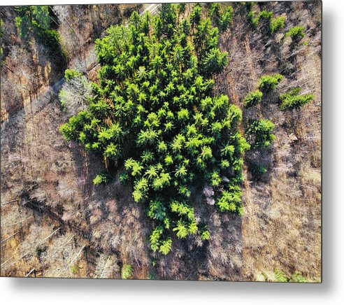 Green Trees In Brown Forest Aerial View - Metal Print