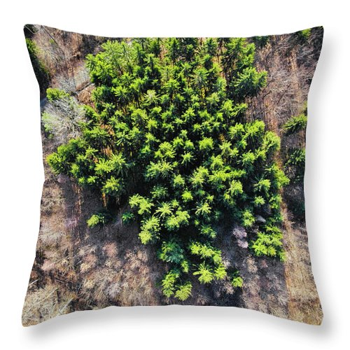 Green Trees In Brown Forest Aerial View - Throw Pillow