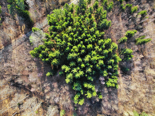 Green Trees In Brown Forest Aerial View - Art Print
