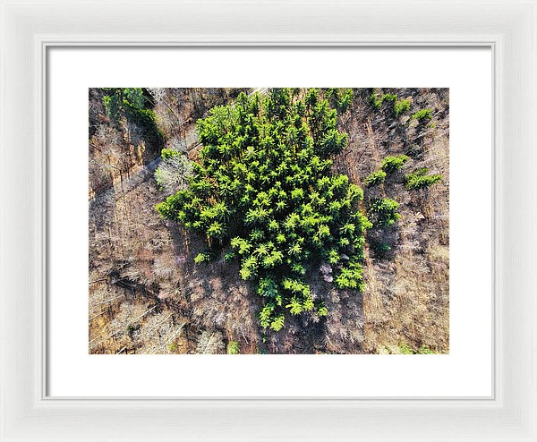 Green Trees In Brown Forest Aerial View - Framed Print