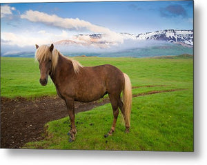 Icelandic Horse In Wonderful Landscape In Iceland - Metal Print