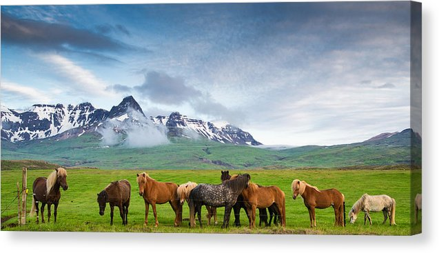 Icelandic Horses In Mountain Landscape In Iceland - Canvas Print