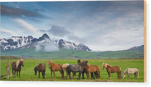 Icelandic Horses In Mountain Landscape In Iceland - Wood Print