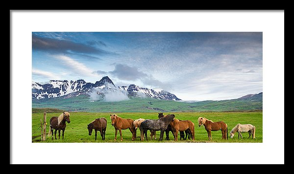 Icelandic Horses In Mountain Landscape In Iceland - Framed Print