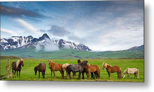 Icelandic Horses In Mountain Landscape In Iceland - Metal Print