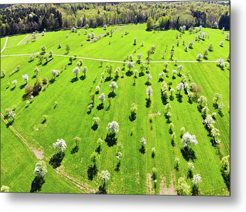 Trees And Meadow In Spring Aerial View - Metal Print