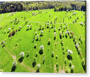 Trees And Meadow In Spring Aerial View - Acrylic Print