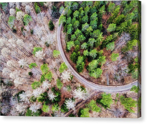 Trees And Path From Above Drone Photography - Canvas Print