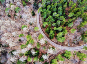 Trees And Path From Above Drone Photography - Art Print