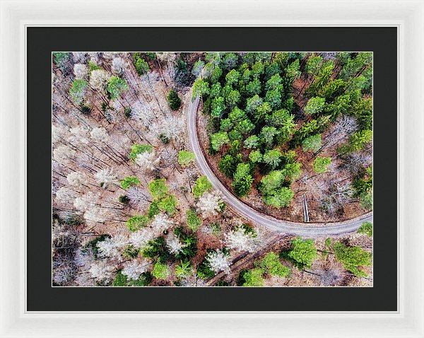 Trees And Path From Above Drone Photography - Framed Print