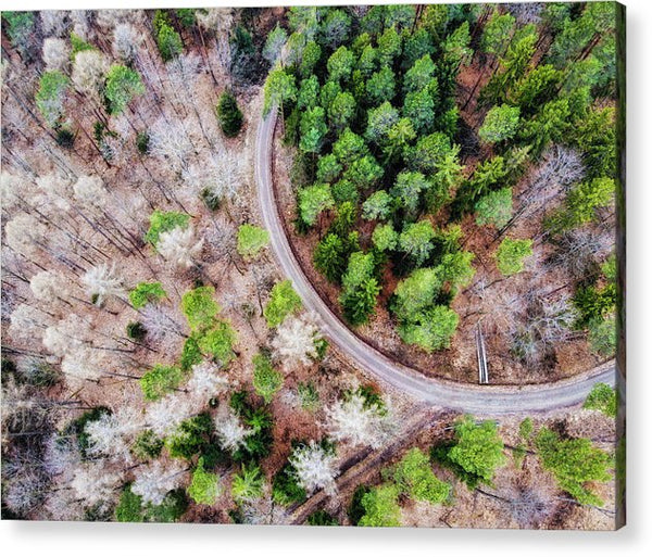 Trees And Path From Above Drone Photography - Acrylic Print