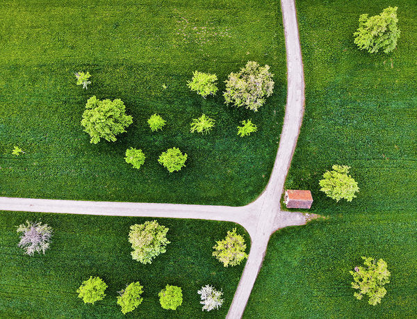 Trees And Roads From Above Drone Photography - Art Print