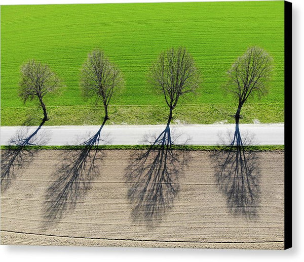 Trees And Shadows Aerial View - Canvas Print