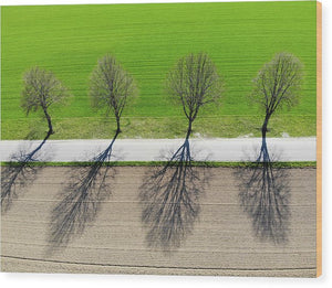 Trees And Shadows Aerial View - Wood Print