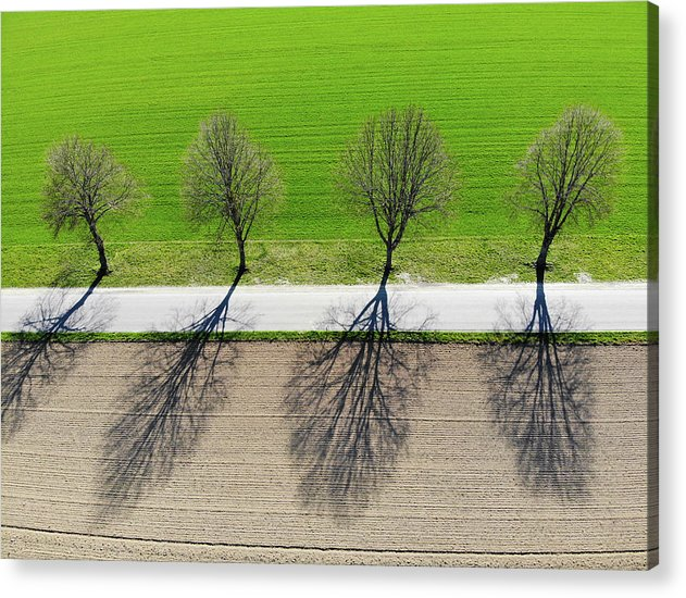 Trees And Shadows Aerial View - Acrylic Print