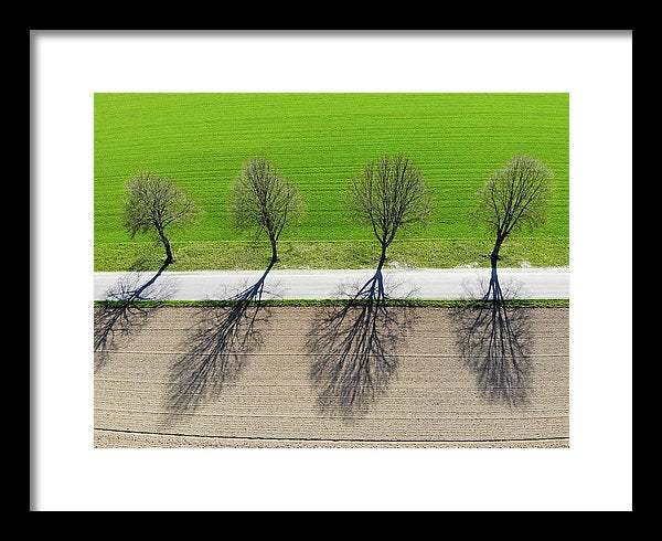 Trees And Shadows Aerial View - Framed Print