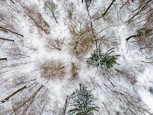 Trees In Winter From Above - Drone Photography - Art Print