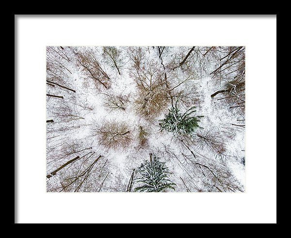 Trees In Winter From Above - Drone Photography - Framed Print