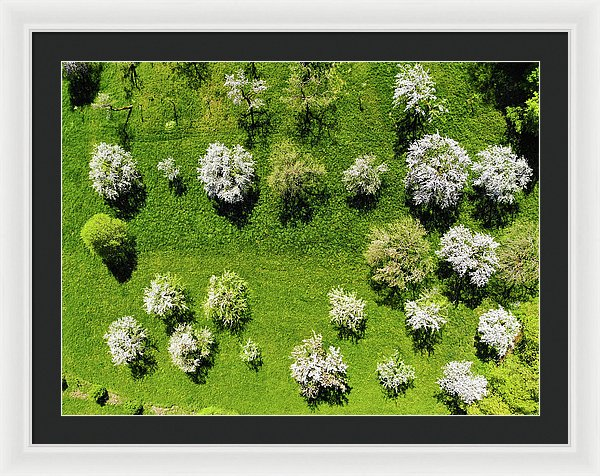 Trees On Green Spring Meadow Aerial View - Framed Print
