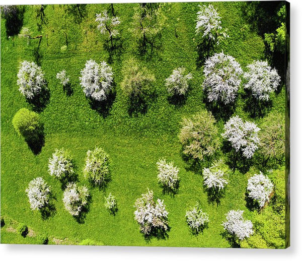 Trees On Green Spring Meadow Aerial View - Acrylic Print