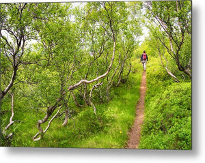 Walk In Beautiful Green Forest In Iceland - Metal Print