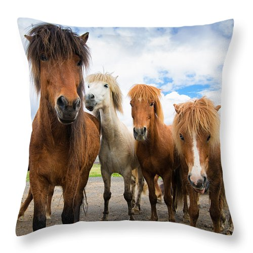 Whats Going On - Four Curious Iceland Horses - Throw Pillow