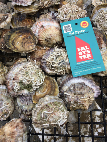 Cornish Native Oyster Growth Trays - Fal Oyster Ltd