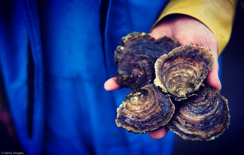 Getty images - Cornish Native Fal Oyster