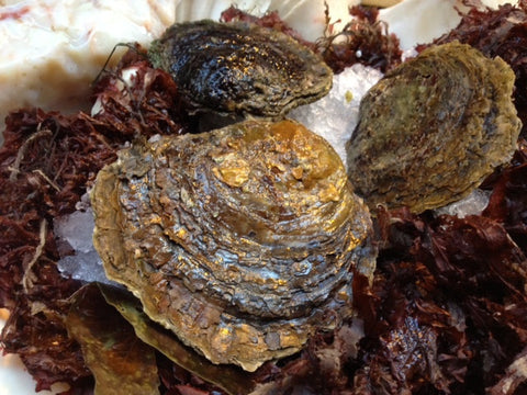36 x Cornish Native 'Fal Oysters' for Christmas or New Year